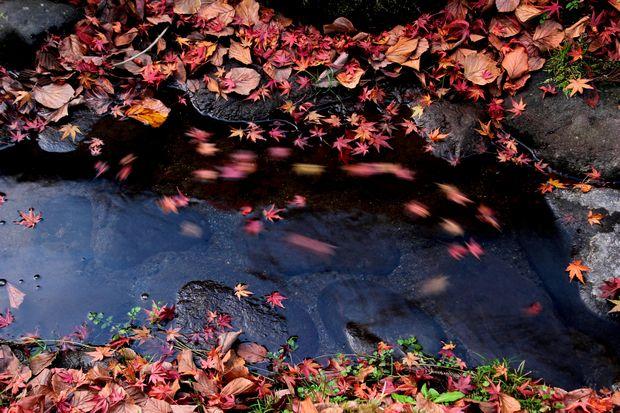 30,11,16杉並木公園の紅葉1-6b.jpg