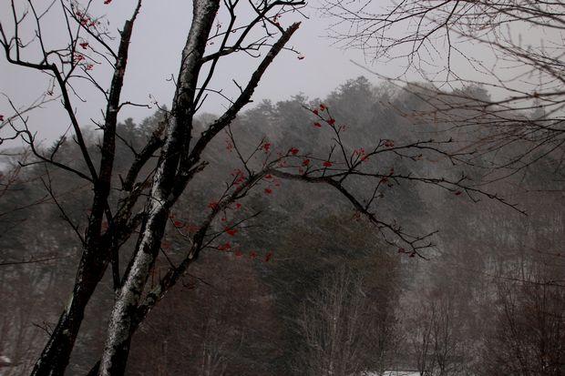30,12,29 吹雪の中禅寺湖1-2b.jpg