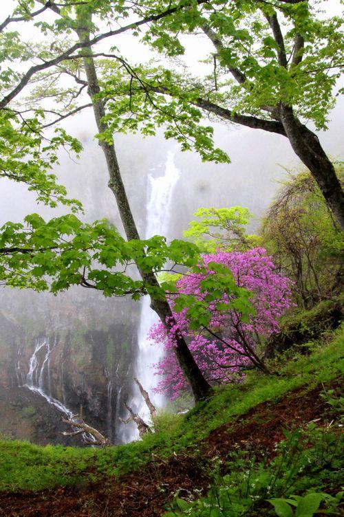 30,5,13 華厳の滝とツツジ2-3b.jpg