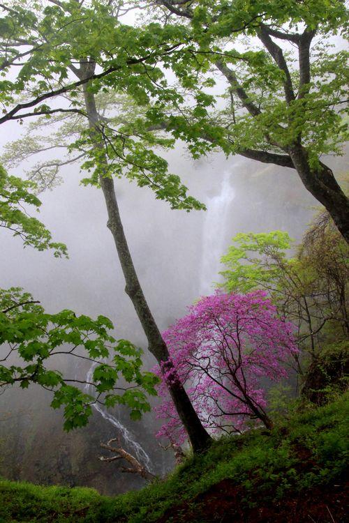 30,5,13 華厳の滝とツツジ2-6b.jpg
