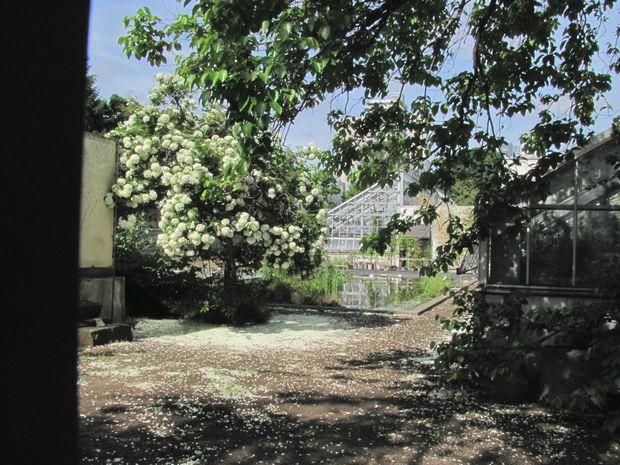 30,6,10北大植物園1-1b.jpg