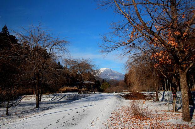 31,1,26雪の大谷川公園3-6b.jpg